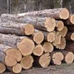 Древесина для строительства дома: плюсы и минусы