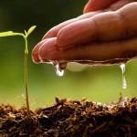 Аграрные дела. Агрохимическое обследование почвы и растений